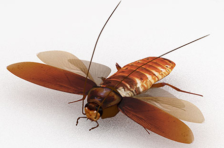 virtual-cockroach